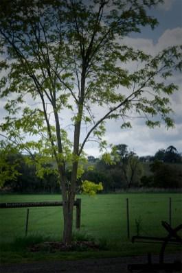 alowyn-gardens-lensbaby-velvet-85-1197
