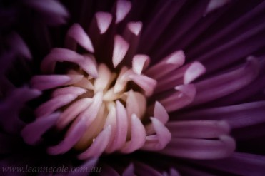 flower-garden-show-macro-edit-1042