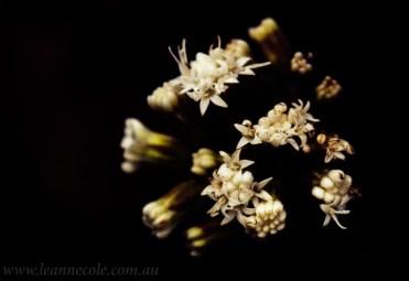 flower-garden-show-macro-edit-1047