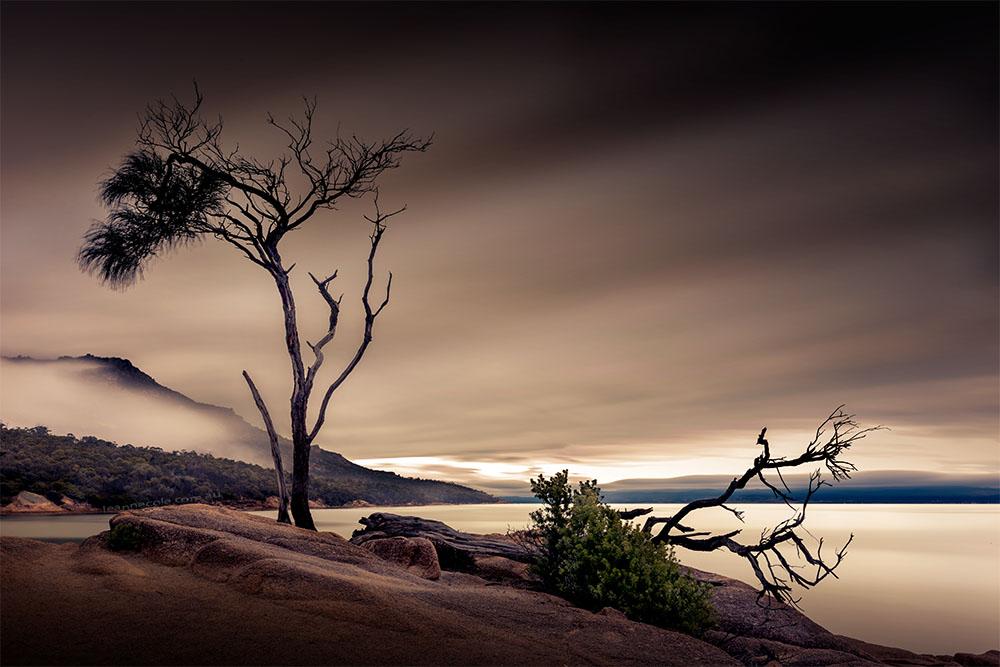honeymoon-bay-tasmania-longexposure-tree