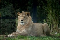melbourne-zoo-animals-1on1-2039