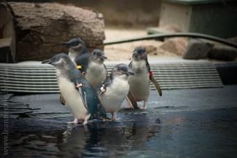 melbourne-zoo-animals-1on1-2184
