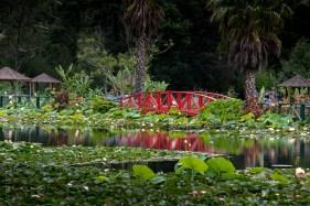 blue-lotus-waterlillies-flower-garden-0721