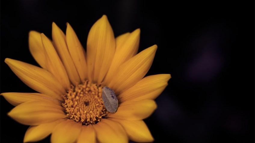 flower-garden-d850-lensbaby-velvet85