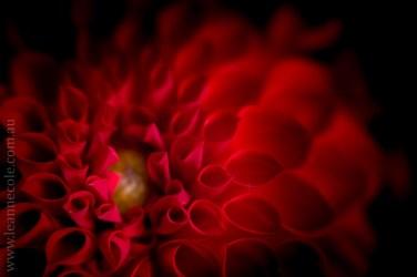 flowers-macro-mifgs-lensbaby-velvet56-9927