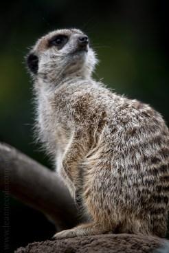melbourne-zoo-animals-tamron-150600-4259