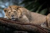 melbourne-zoo-animals-tamron-150600-4531