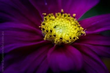 mifgs-flower-macro-tamron-melbourne-7187