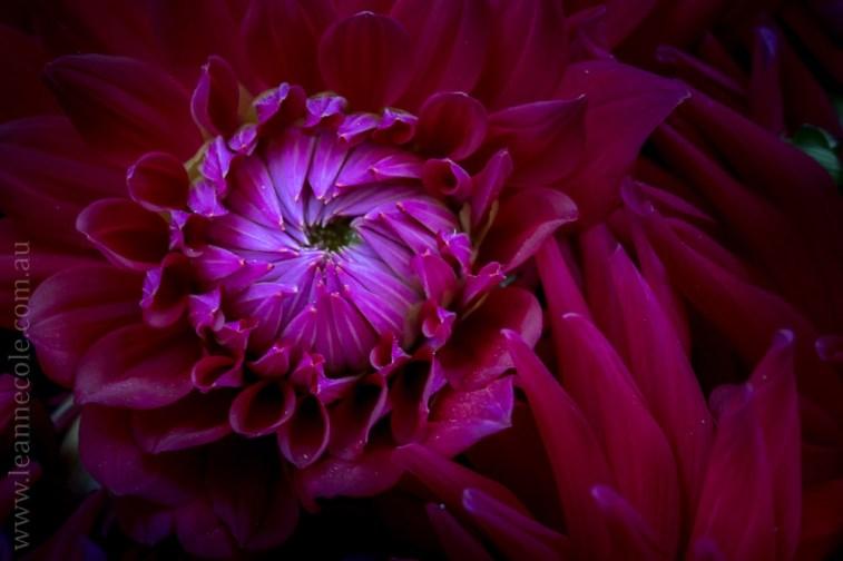 mifgs-flower-macro-tamron-melbourne-7228