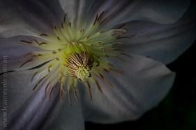 mifgs-flower-macro-tamron-melbourne-7386