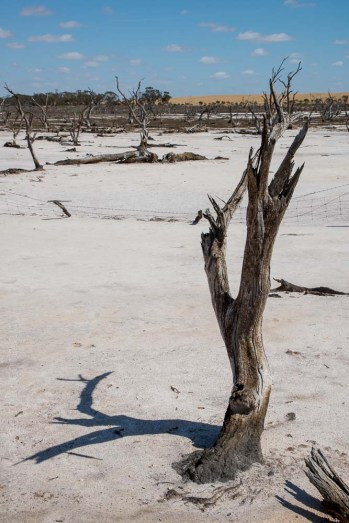 saltpans-salinity-SwanHill-rural-environment-2759