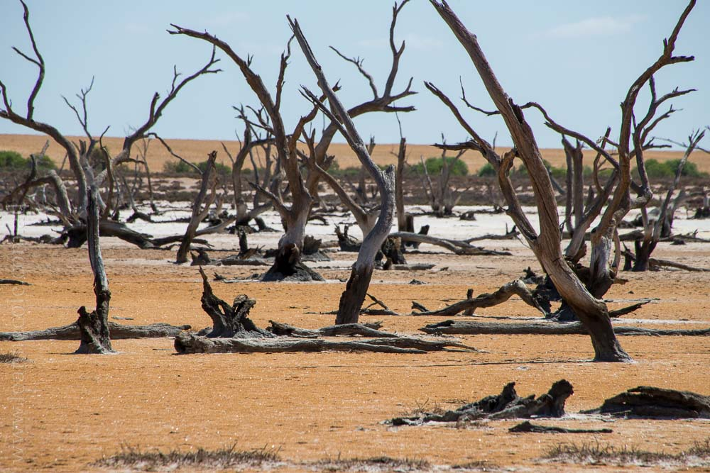 saltpans-salinity-SwanHill-rural-environment-2778