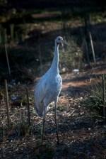 serendip-sanctuary-birds-victoria-geelong-5375