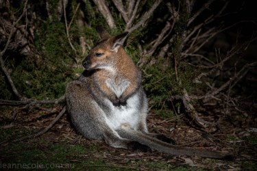 moonlit-sanctuary-birds-animals-wild-3549