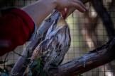 moonlit-sanctuary-birds-animals-wild-3736