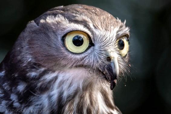 moonlit-sanctuary-birds-animals-wild-4107