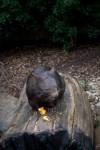 healesville-sanctuary-animals-lensbaby-velvet56-4981