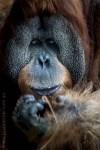 melbourne-zoo-animals-1on1-1824