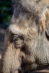 melbourne-zoo-tamronlens-150-600-1008