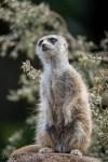 melbourne-zoo-tamronlens-150-600-1024