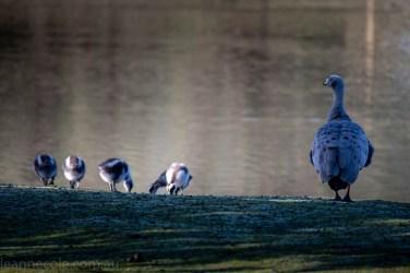 moonlit-sanctuary-birds-animals-wild-3615