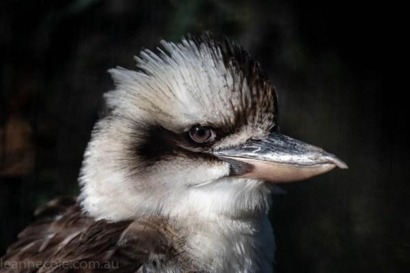 moonlit-sanctuary-birds-animals-wild-3655