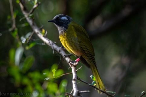 tamron-100-400-healesville-sanctuary-1842