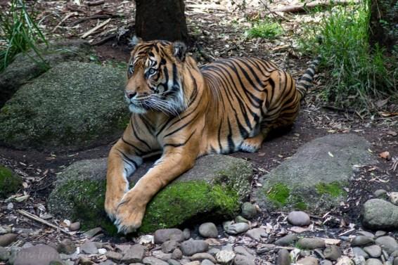 melbourne-zoo-animals-0342