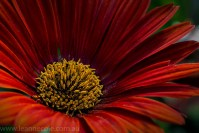 abbotsford-convent-gardens-flowers-macro072