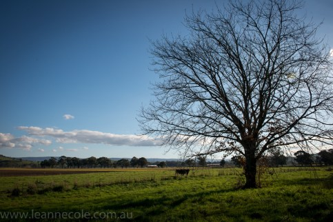 eildon-lake-water-country-farms-30