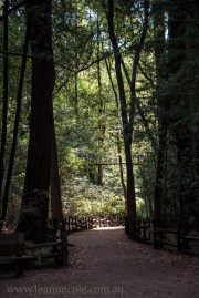 henry-cowell-redwoods-santacruz-mountains-4470