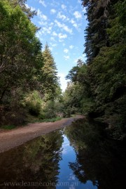 henry-cowell-redwoods-santacruz-mountains-4515