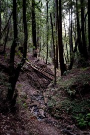 henry-cowell-redwoods-santacruz-mountains-4538