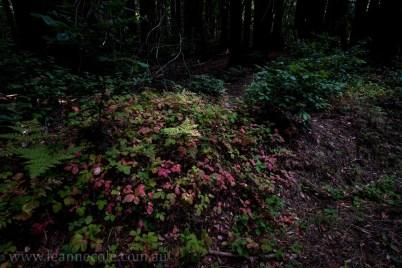henry-cowell-redwoods-santacruz-mountains-4569
