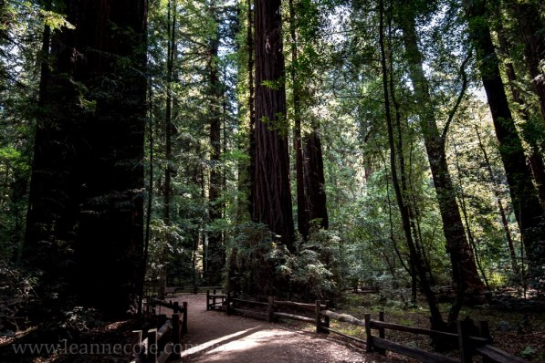 henry-cowell-redwoods-santacruz-mountains-4587