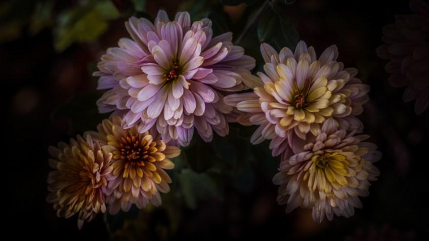 Paul Barson Floral Portraits