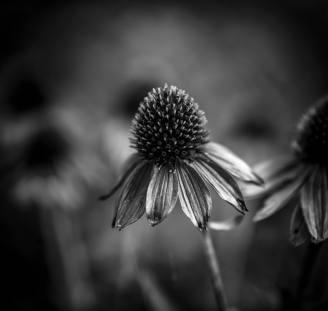 Leslie Gleim, Macro Photography
