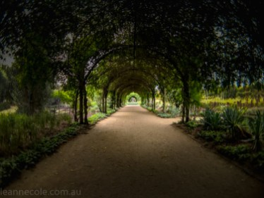 alowyn-gardens-struman-phone-fisheye-105633