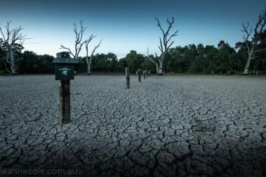 banyule-flats-swamp-dry-autumn-3207