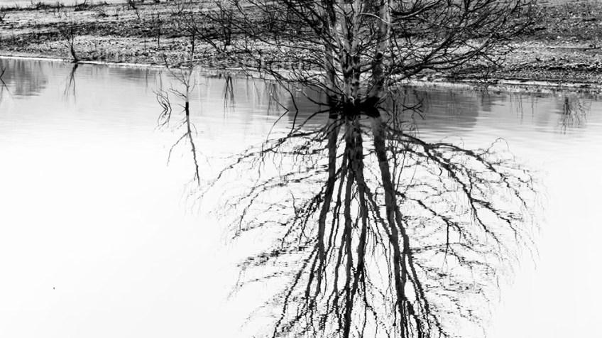 bonnie-doon-fog-tree-lake-header