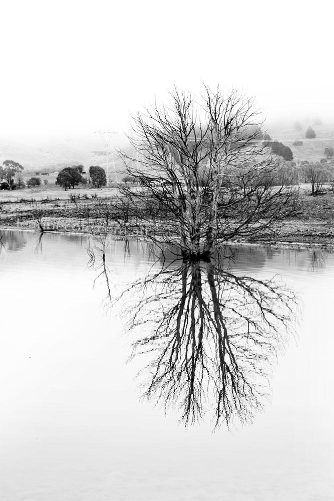 bonnie-doon-fog-tree-lake