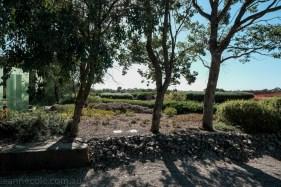 cranbourne-botannical-gardens-fujifilm-melbourne-9068