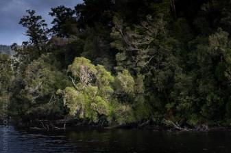 glacierlake-tours-boat-lake-rainforest-9269