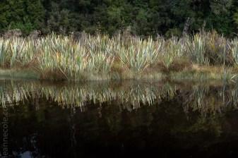 glacierlake-tours-boat-lake-rainforest-9274