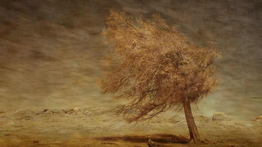 tree-dust-on1-textures-australia