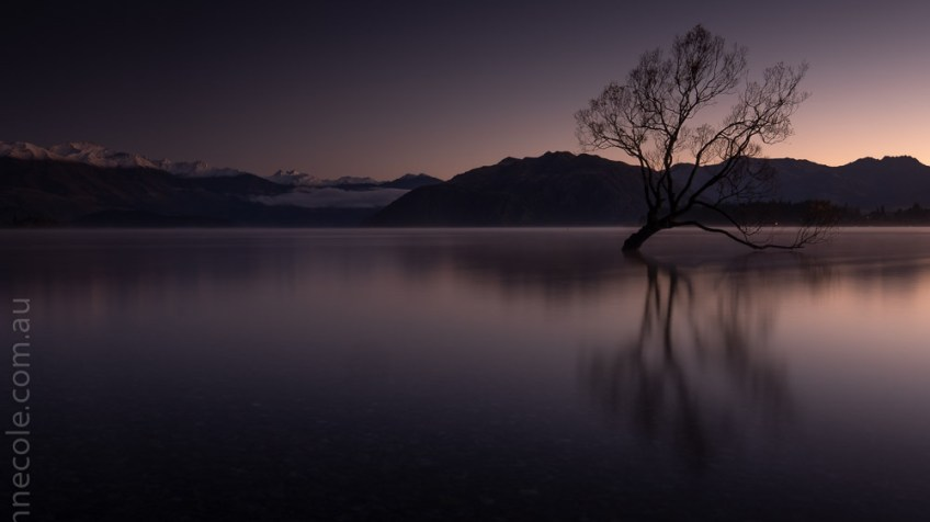 tree-wanaka-sunrise-water-newzealand-9695