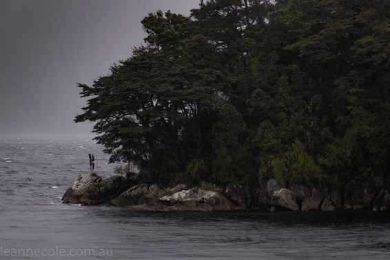doubtfulsound-weather-waterfalls-newzealand-boat-0676