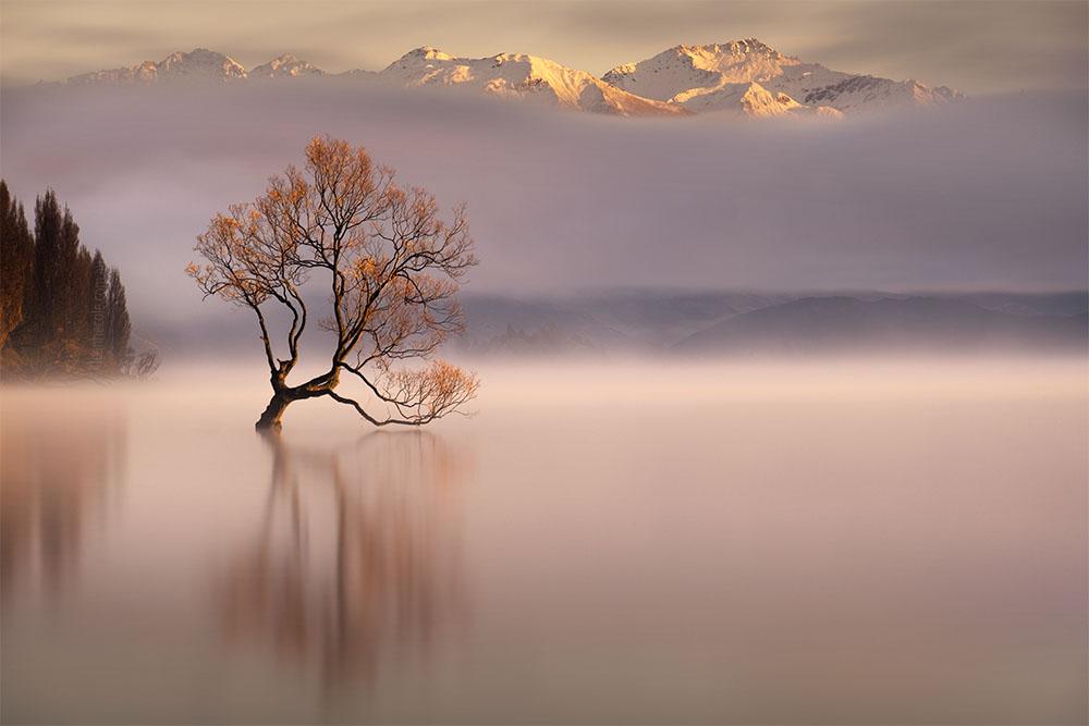 That Wanaka Tree in New Zealand