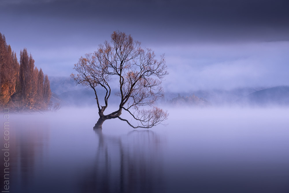 wanake-tree-mist-lake-newzealand-9779