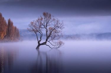 wanake-tree-mist-lake-newzealand-9779
